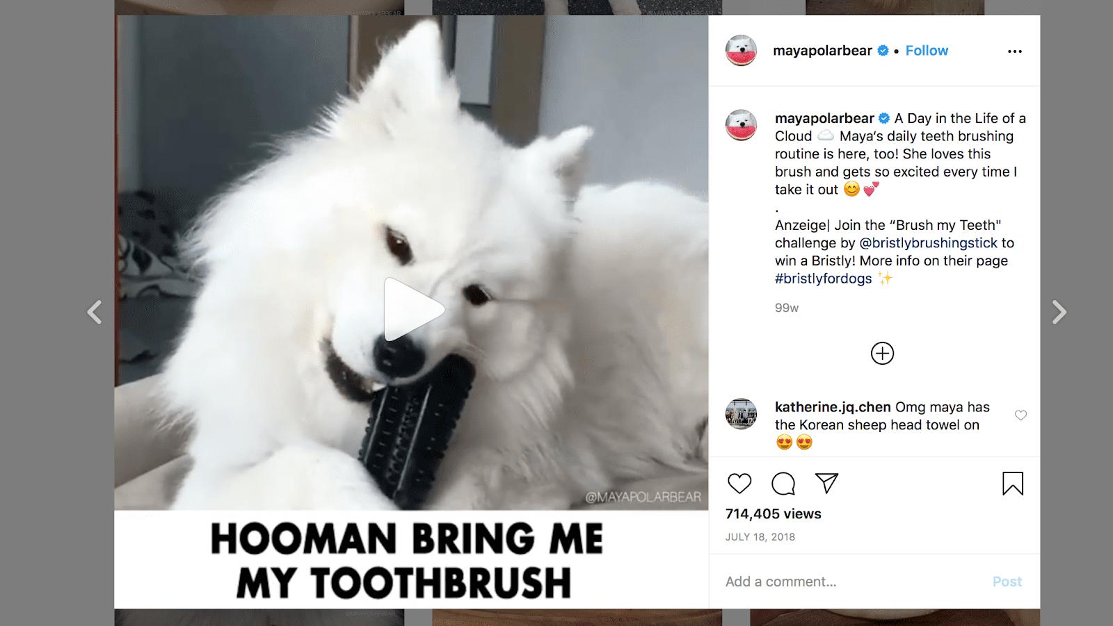 bristly-dog-toothbrush-influencer-marketing