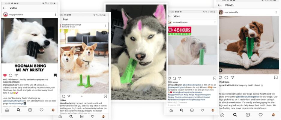dog-influencers-brushing-stick