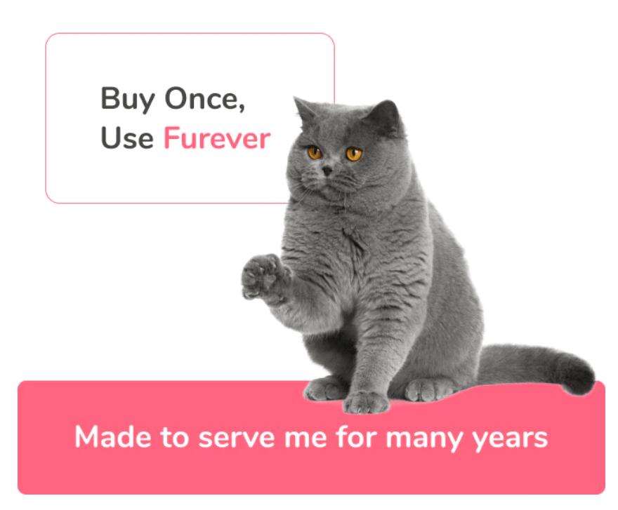 kickstarter kitty spring
